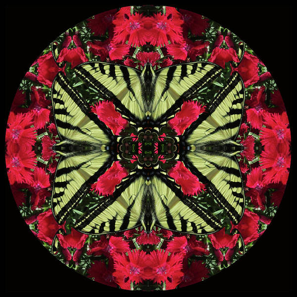 Monarch On Dianthus Kaleidoscope Art Print