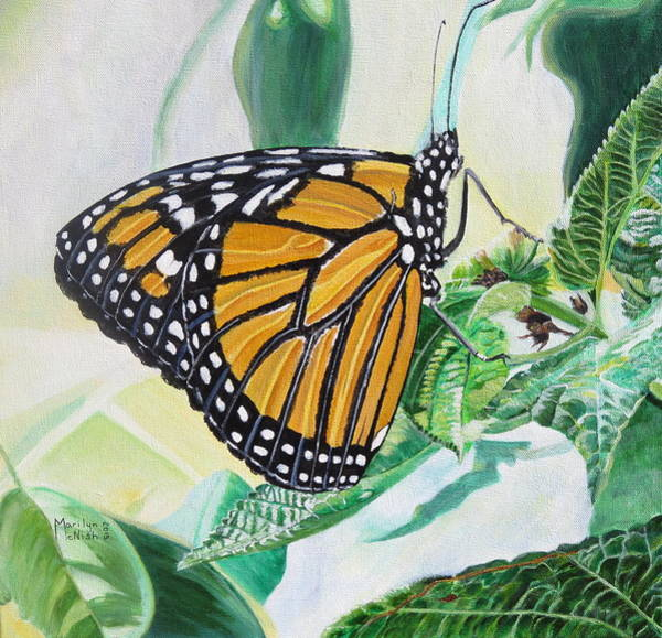 Painting - Monarch Portrait by Marilyn  McNish