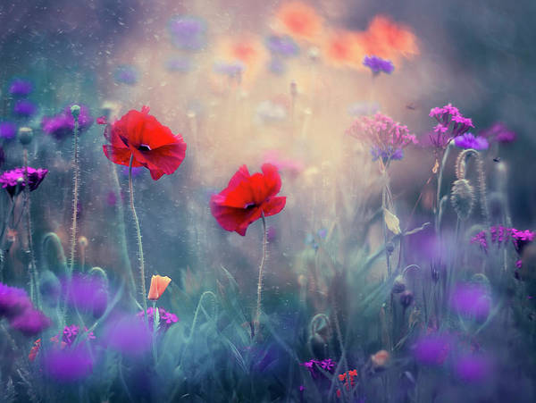 Wall Art - Photograph - Monet's Garden- Newer Version by Magda Bognar