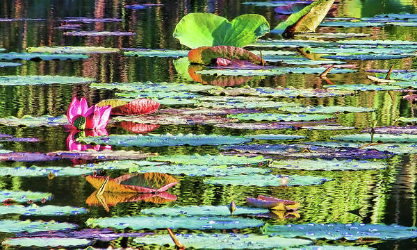 Claude Monet Photograph - Monets Pond by HH Photography of Florida