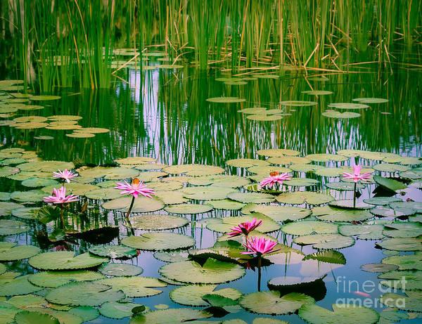 Wall Art - Photograph - Monet's Waterlilies by Liesl Walsh