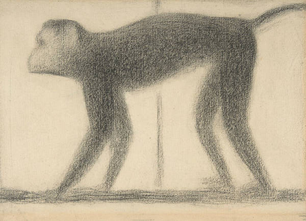 Drawing - Monkey by Georges-Pierre Seurat