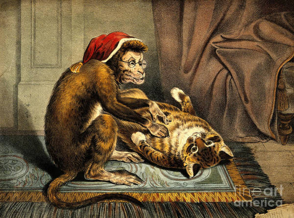 Photograph - Monkey Physician Examining Cat For Fleas by Wellcome Images