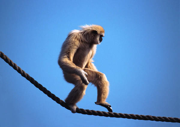 Photograph - Monkey Walking On Rope by John Foxx