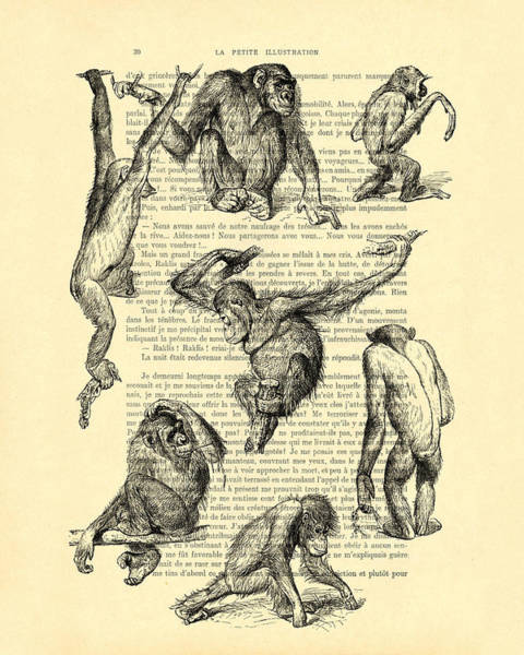 Playful Digital Art - Monkeys Black And White Illustration by Madame Memento