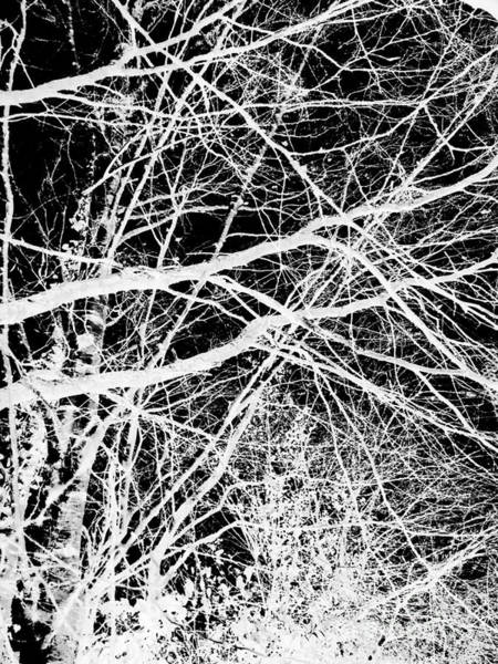 Photograph - Monochrome Abstract Tree Landscape by Itsonlythemoon