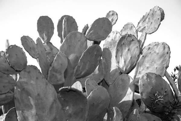 Wall Art - Digital Art - Monochrome Cactus 4 by Mark Ashkenazi