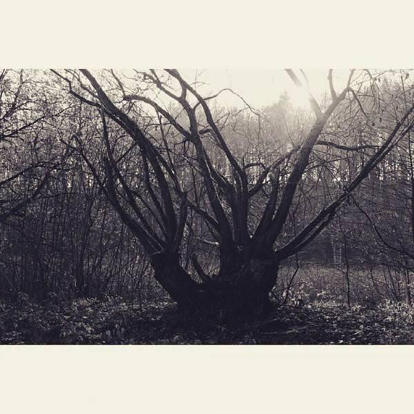 Monochrome Photograph - #monochrome #canon #tree #blackandwhite by Mandy Tabatt