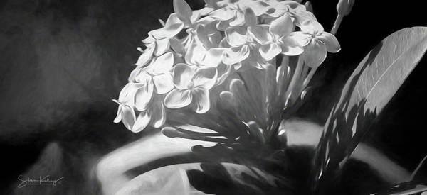 Digital Art - Monochrome Flora by Steve Kelley