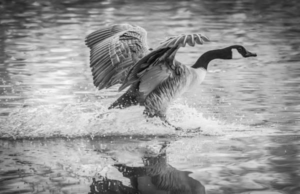 Photograph - Monochrome Landing by Parker Cunningham