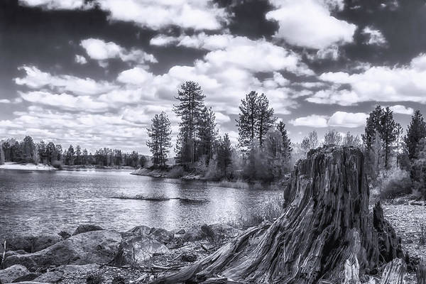 Plumas County Photograph - Monochrome Remnants  by Marnie Patchett