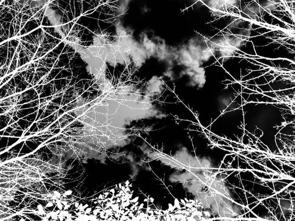 Photograph - Monochrome Winter Sky And Trees by Itsonlythemoon