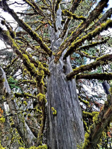 Digital Art - Monster Tree by Susan Kinney