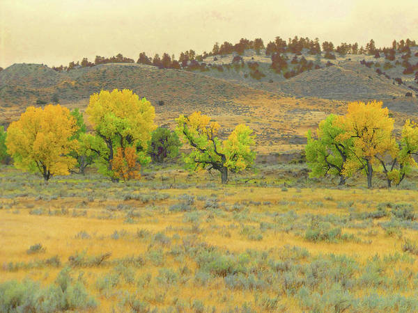 Photograph - Montana Cottonwood Reverie by Cris Fulton
