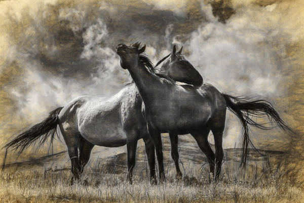 Steed Photograph - Montana Horses Digital Graphic by Randall Nyhof