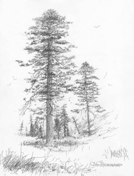 Wall Art - Drawing - Montana-ponderosa Pine by Jim Hubbard