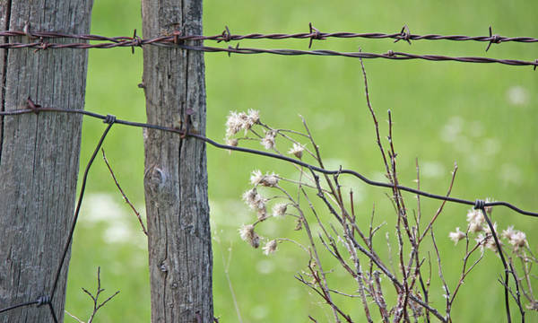 Wall Art - Photograph - Montana Rustic Fence And Weeds  by Jennie Marie Schell