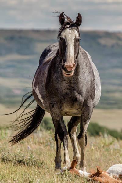 Photograph - Montana Wild Mare 2 by Teresa Wilson