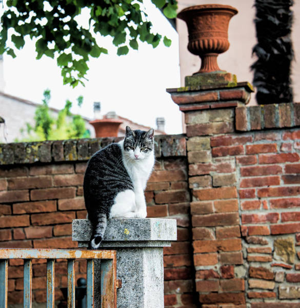 Greeters Photograph - Montepulciano, Tuscany, Italy, Cat Greeter by Curt Rush