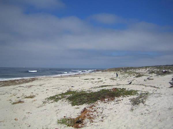 Photograph - Monterey California Usa by John Shiron