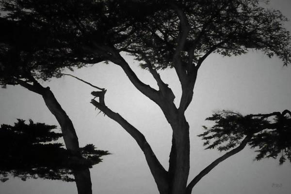 Photograph - Monterey Cypress I Bw by David Gordon