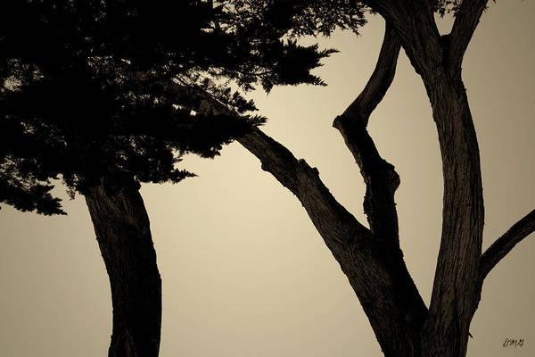Photograph - Monterey Cypress II Toned by David Gordon