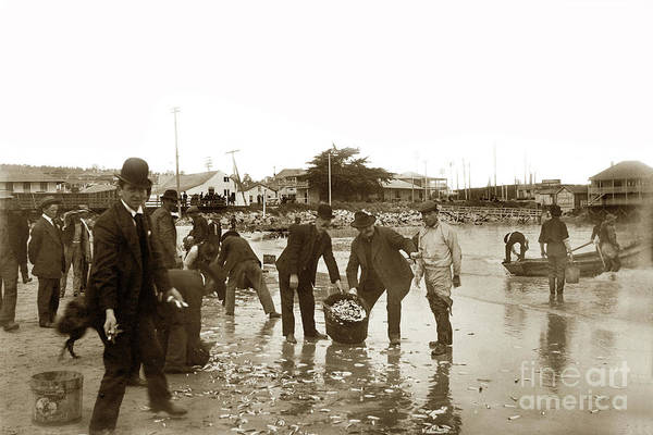Photograph - Monterey Locals Collecting Smelt On The Beach Near The Custom House by California Views Archives Mr Pat Hathaway Archives