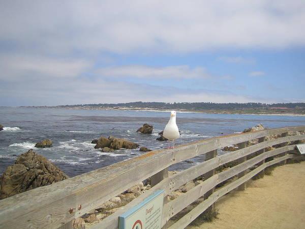 Photograph - Monterey Seabird California Usa by John Shiron