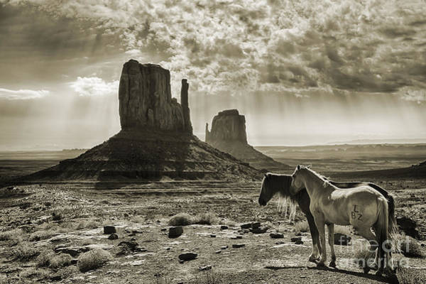 The Mitten Photograph - Monument Valley Horses - Sepia by Priscilla Burgers