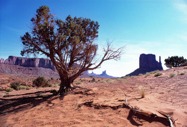 Photograph - Monument Valley Tree 1 by Kim Lessel