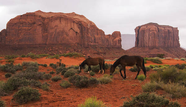 Photograph - Monument Valley Wild Horses by Brad Scott