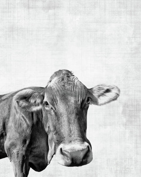 Wall Art - Photograph - Moo by Delphimages Photo Creations