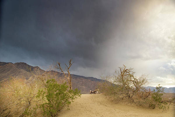 Death Valley Np Photograph - Moods Of The Mesquite by Kunal Mehra