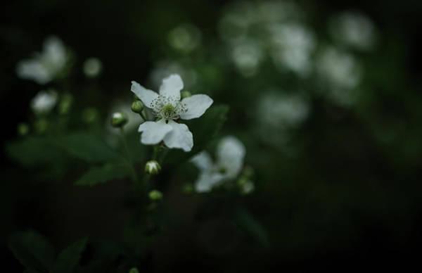 Wall Art - Photograph - Moody Flower by Paul Green