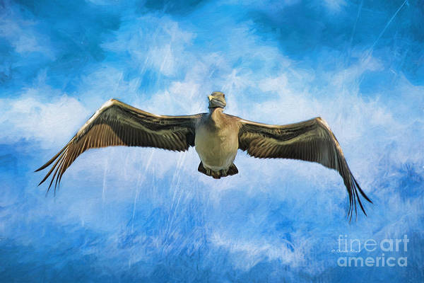 Painting - Moody Pelican by Deborah Benoit