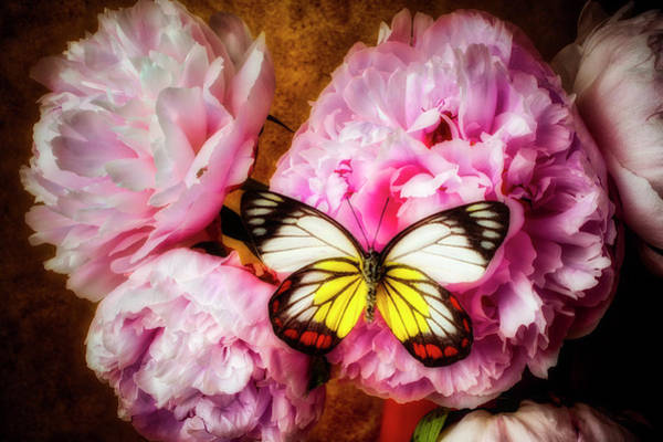 Photograph - Moody Peonies And Butterfly by Garry Gay