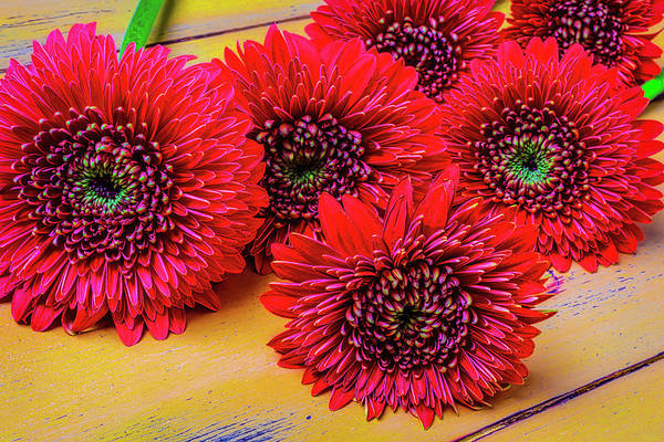 Wall Art - Photograph - Moody Red Gerbera Dasies by Garry Gay