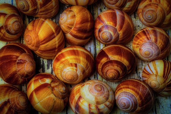 Wall Art - Photograph - Moody Snail Shells by Garry Gay