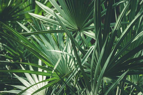 Photograph - Moody Tropical Leaves by Andrea Anderegg