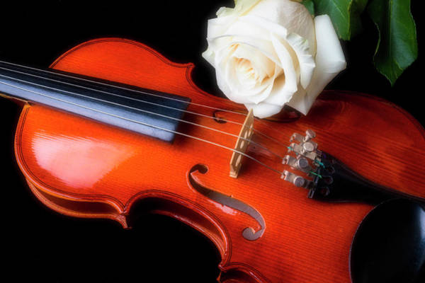 Foilage Photograph - Moody Violin And Rose  by Garry Gay