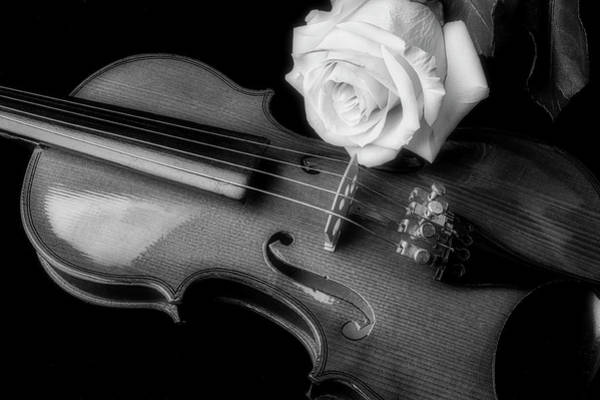 Foilage Photograph - Moody Violin And Rose In Black And White by Garry Gay