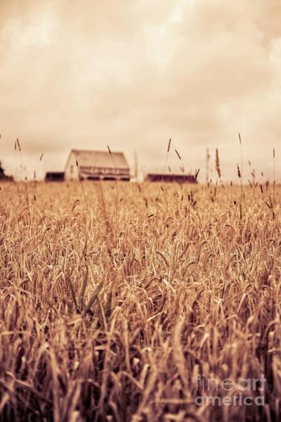 Field Trip Photograph - Moody Wheat Field Prince Edward Island by Edward Fielding