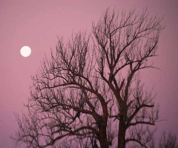 Photograph - Moon And Tree by Sumoflam Photography