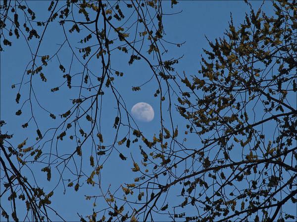 Moon And Trees 1 Art Print