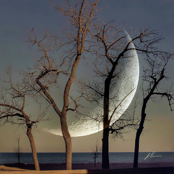 Photograph - Moon And Trees by Jackson Pearson