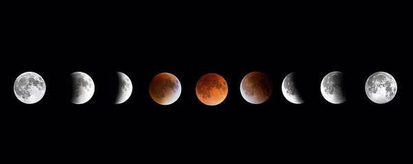 Photograph - Total Lunar Eclipse by Bill Wakeley