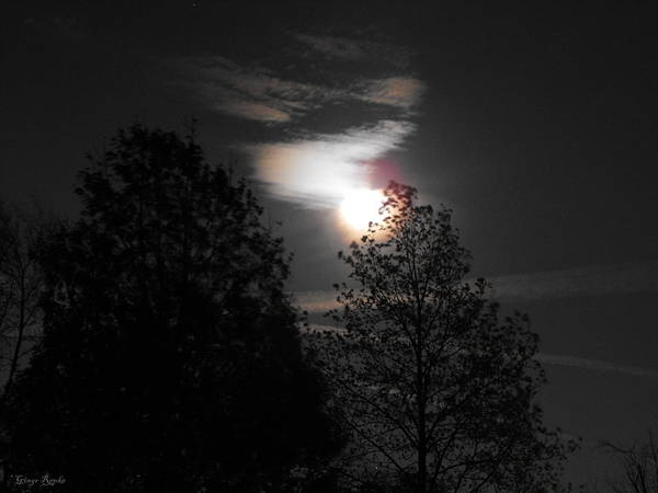 Saint Louis County Photograph - Moon Corona With Trees by Ginger Repke