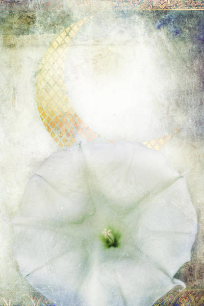 Moon Flower Photograph - Moon Flower by MGL Meiklejohn Graphics Licensing
