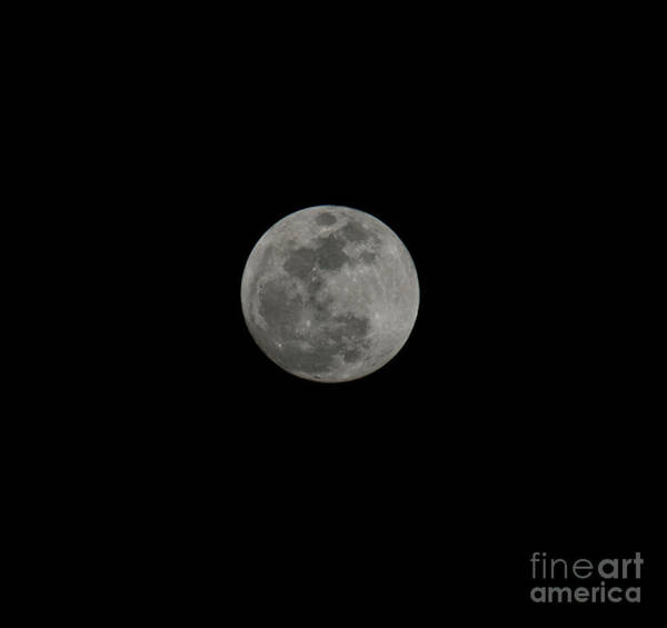 Photograph - Moon Gaze by Dale Powell