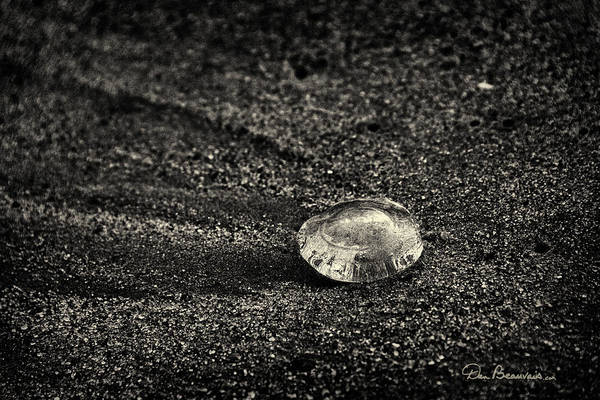 Photograph - Moon Jelly 6516 by Dan Beauvais